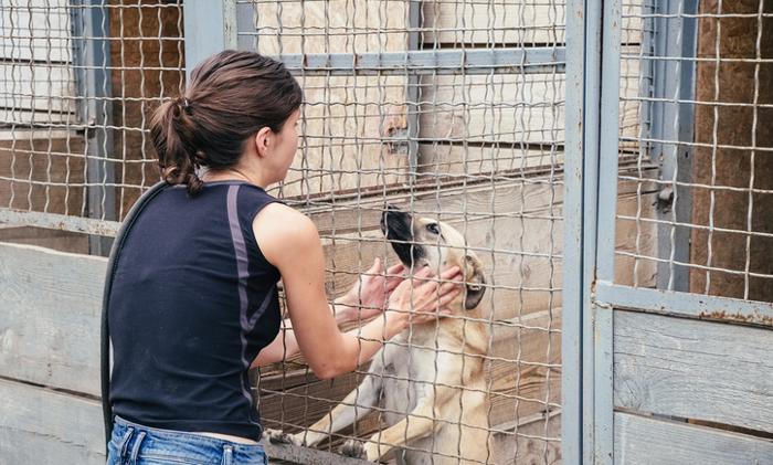 Tierheime In Köln